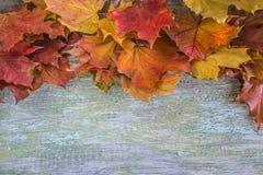 L'érable coloré multi part du cadre Images stock