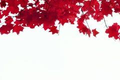 L'érable d'automne part dans la forme ronde avec l'espace libre au centre Image stock