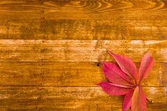 L'érable d'automne part sur le fond en bois avec l'espace de copie Images libres de droits