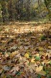 L'érable d'automne part sur un chemin forestier à l'arrière-plan sauvage et abstrait Image stock