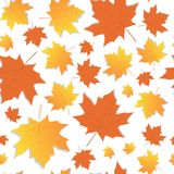 L'érable d'Autumn Seamless Pattern Background Yellow part de l'automne d'ornement Photos libres de droits