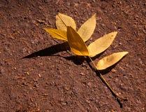 L'érable en baisse d'automne part du fond naturel Photos stock