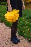L'érable jaune part dans les mains de la fille Automne Photos libres de droits