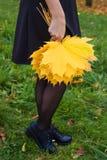 L'érable jaune part dans les mains de la fille Automne Image libre de droits
