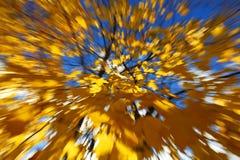 Fond abstrait des feuilles Images libres de droits