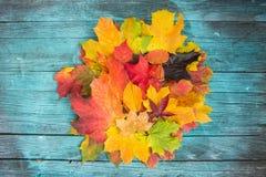 L'érable laisse des couleurs mélangées d'automne sur le fond en bois Images stock