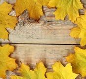 L'érable laisse le cadre sur la texture en bois Image libre de droits