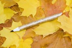 L'érable laisse le fond et le crayon Photographie stock