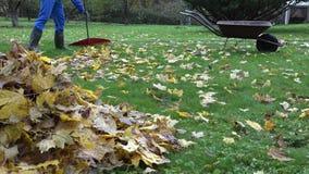 L'érable sec de râteau masculin de travailleur part dans le jardin dans le temps d'automne 4K banque de vidéos