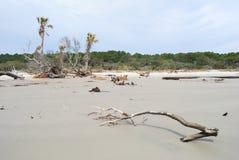 L'érosion a tué des arbres à l'île de chasse, Sc Etats-Unis Image stock