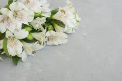 L'été blanc de ressort d'Alstroemeria fleurit Gray Textured Cement Background avec la pâte de copie floristique images libres de droits