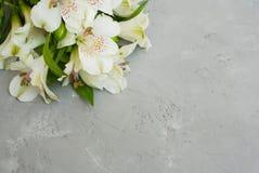 L'été blanc de ressort d'Alstroemeria fleurit Gray Textured Cement Background avec la pâte de copie floristique photo libre de droits
