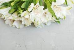 L'été blanc de ressort d'Alstroemeria fleurit Gray Textured Cement Background avec la pâte de copie floristique photographie stock