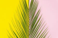 L'été est prochain concept d'art de bruit Palmette de vue supérieure sur le fond jaune et rose-clair photos libres de droits