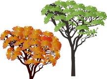 L'été et tombent deux arbres d'isolement sur le blanc Image libre de droits