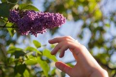 L'été fleurit le fond Photos libres de droits