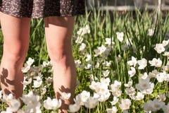 L'été fleurit le fond Images stock