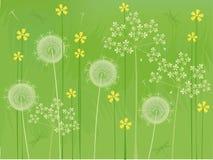L'été fleurit le fond Image libre de droits