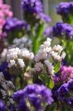 L'été rose, pourpre et blanc fleurit dans le plan rapproché de bouquet photo stock