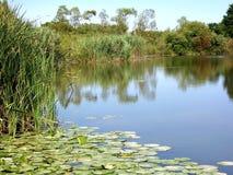 L'étang Image stock