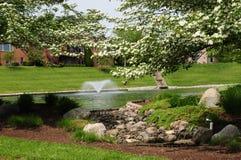 L'étang dans le printemps Images stock