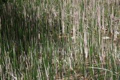L'étang naturel est pollué avec des déchets d'eaux d'égout et de ménage L'eau contaminée des canaux de canalisation pollue la nat photos libres de droits