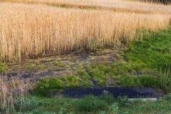 L'étang naturel est pollué avec des déchets d'eaux d'égout et de ménage L'eau contaminée des canaux de canalisation pollue la nat photos stock