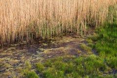 L'étang naturel est pollué avec des déchets d'eaux d'égout et de ménage L'eau contaminée des canaux de canalisation pollue la nat photo libre de droits
