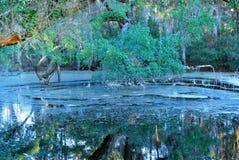 L'étang oublié photographie stock libre de droits