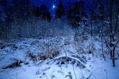 L'étoile de Noël Photo libre de droits