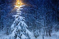 L'étoile de Noël images libres de droits