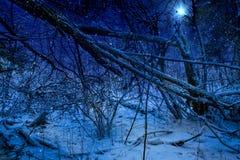 L'étoile de Noël Image stock