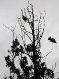 L'évasion d'un oiseau dans des couleurs foncées photo libre de droits