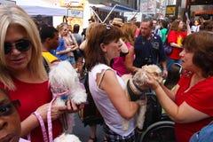 L'être humain et les canines se mélangent Photo stock