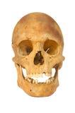 l'être humain a isolé le vieux crâne préhistorique Image libre de droits