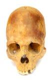 l'être humain a isolé le vieux crâne préhistorique Images stock