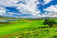 L'île d'Islay images libres de droits