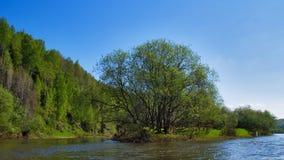 L'île de forêt Photos libres de droits