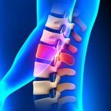 L1圆盘-腰脊柱 向量例证