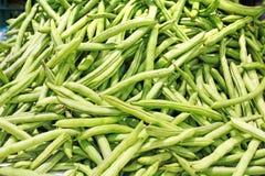 许多的豆绿色l菜豆 免版税库存图片