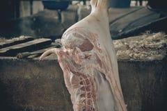 L'abattoir de porcs emploie l'eau chaude pour l'élevage de porcs Photographie stock libre de droits