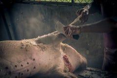 L'abattoir de porcs emploie l'eau chaude pour l'élevage de porcs Images stock