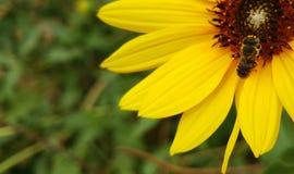 L'abeille Photographie stock libre de droits