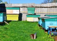 L'abeille amasse la position dans un rucher sur l'herbe verte Images libres de droits