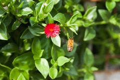 L'abeille de miel photographie stock libre de droits