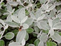 L'abeille indique salut : photos stock