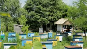 L'abeille, abeille s'amasse dans le jardin, rucher banque de vidéos