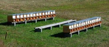 L'abeille s'amasse (rucher) dans un domaine Photographie stock libre de droits