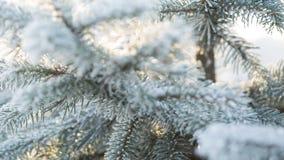 L'abete glassato si ramifica il giorno di inverno, carrello archivi video