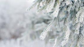 L'abete glassato si ramifica il giorno di inverno, pentola archivi video